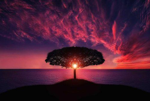 tree, sunset, amazing